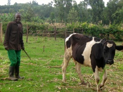 Kiva Zip borrower with the cow he purchased with a Kiva loan
