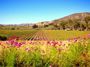 Santa Barbara Wine Country